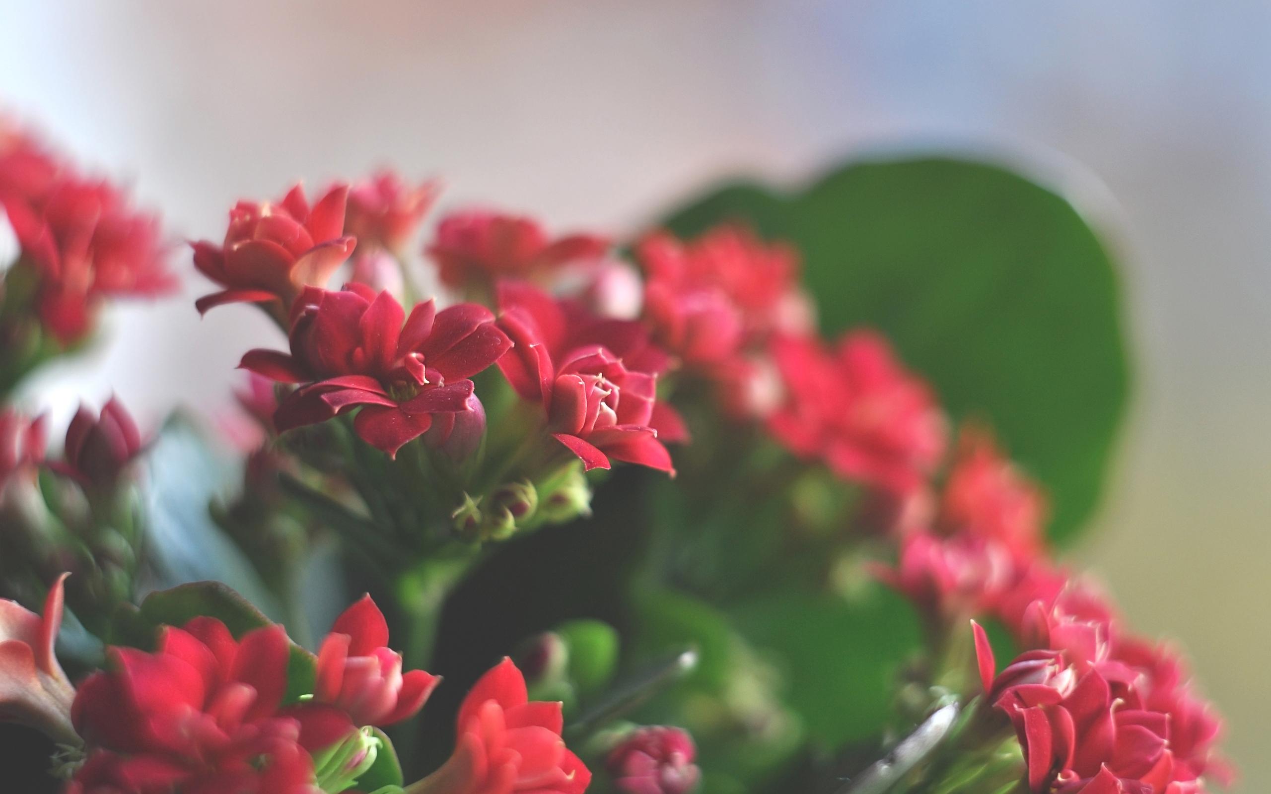 Wallpaper beautiful red flowers beautiful flowers spring beautiful red flowers mightylinksfo