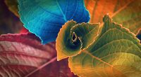 Colors of Leaves372636103 200x110 - Colors of Leaves - Plant, Leaves, Iceland's, Colors, Colorful, Autumn