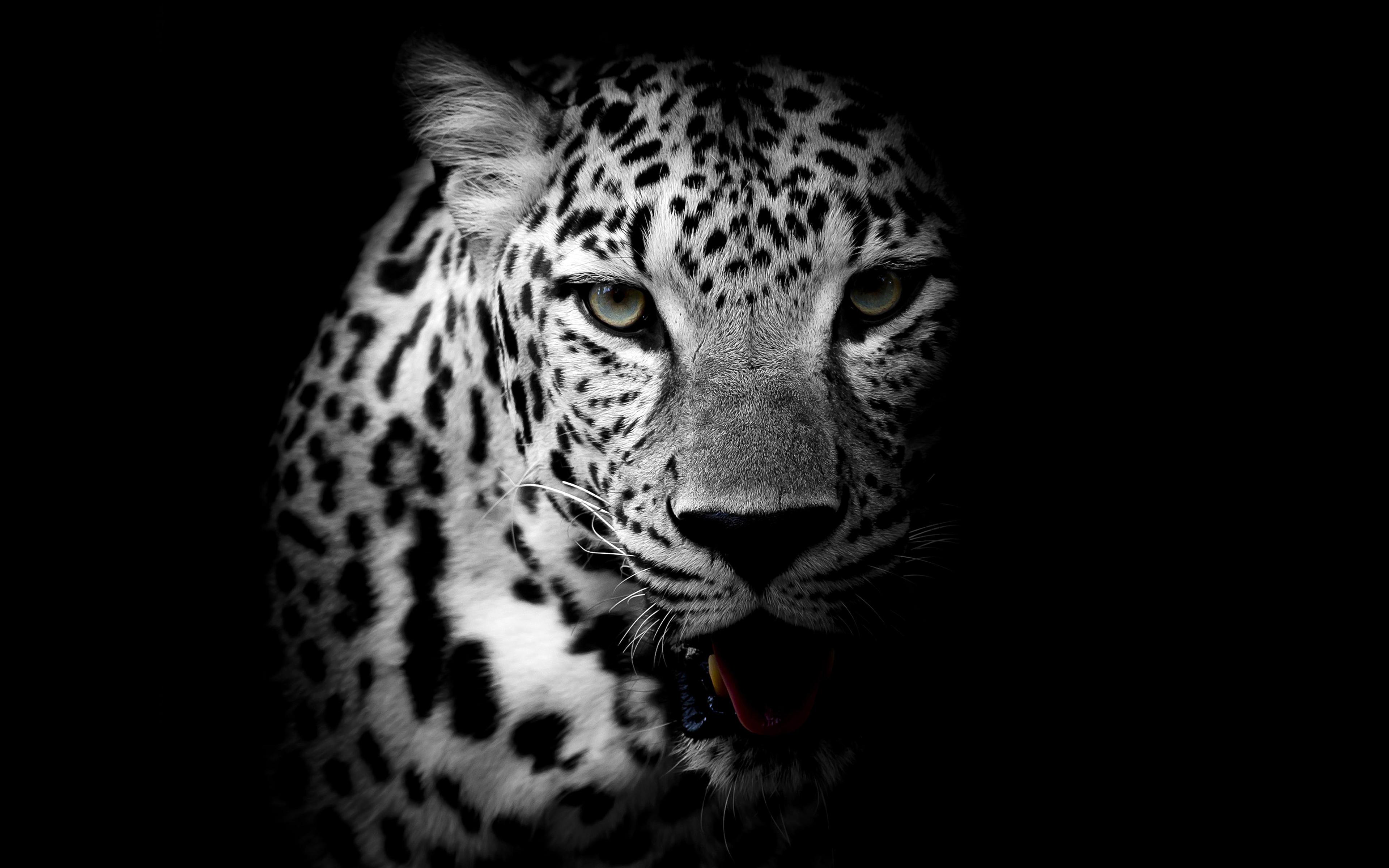 Арт картинки тигра