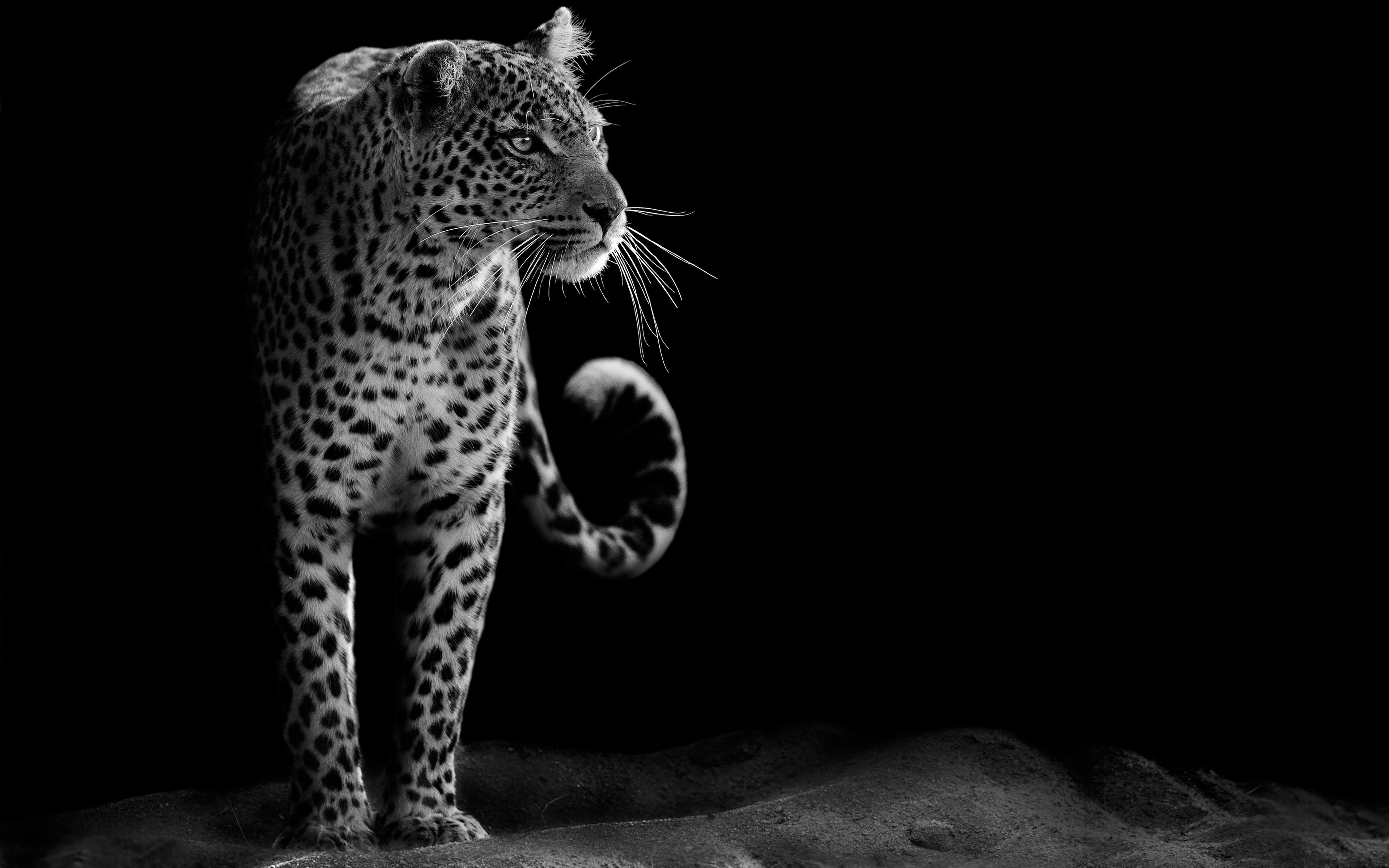 1920x1080 Black Leopard Wallpaper