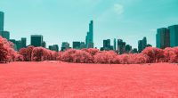 NYC Central Park Infrared 4K332882999 200x110 - NYC Central Park Infrared 4K - Park, NYC, Infrared, Champagne, Central