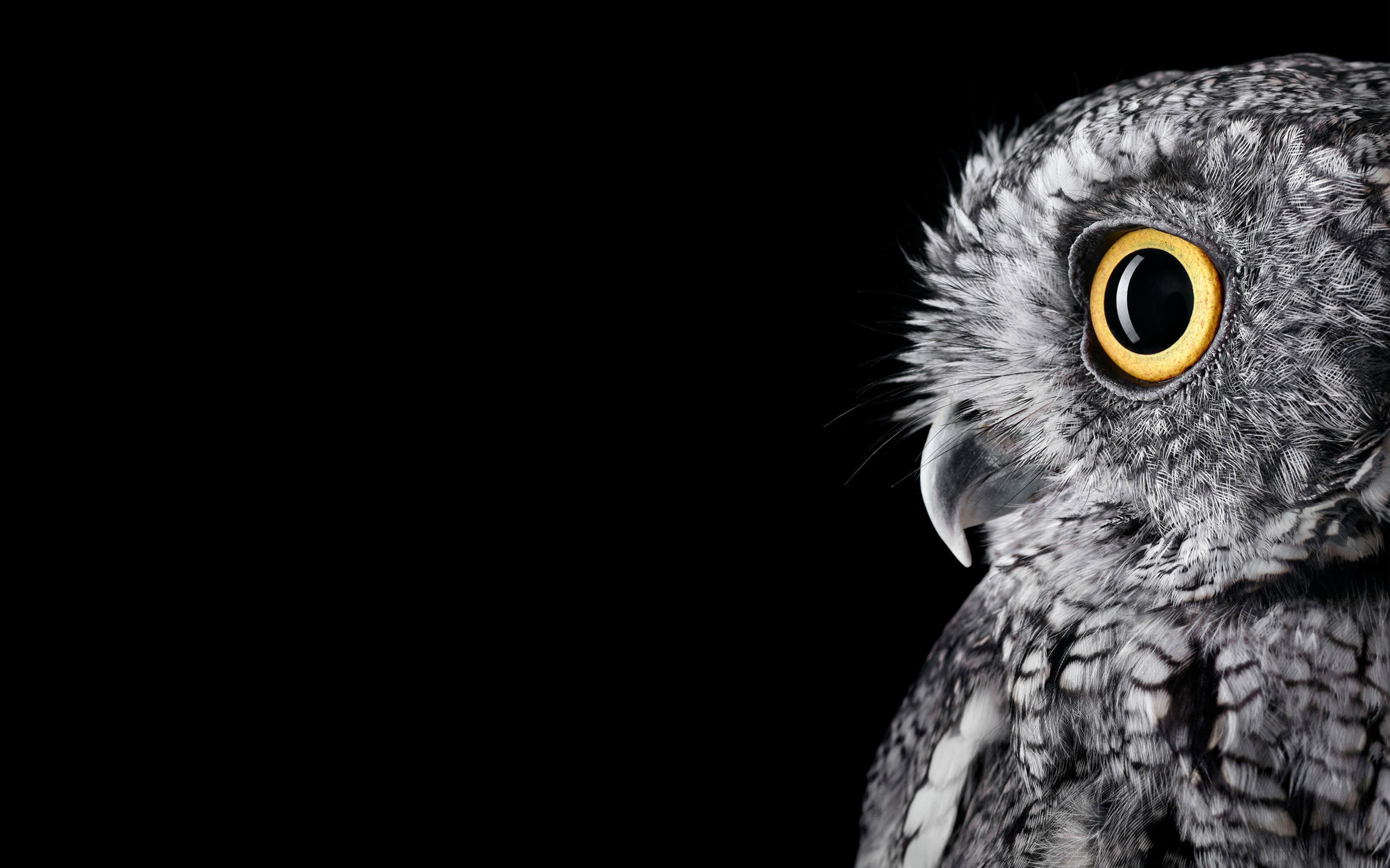 Wallpaper Owl 4K 5K Macaws