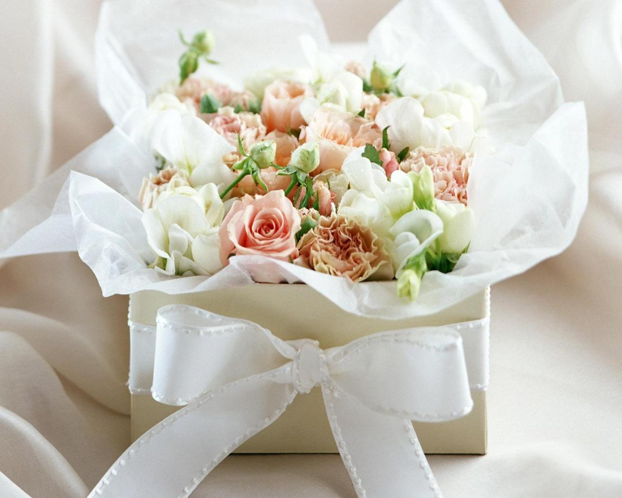 Wallpaper White Rose Flowers Cincinnati