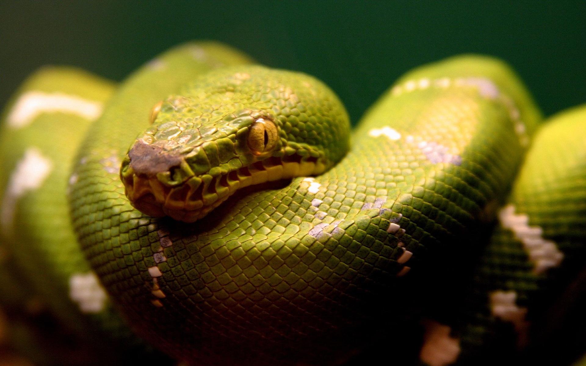 snake - HD1920×1200
