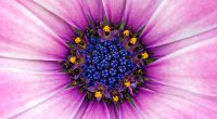 Amazing Purple Flower306791054 200x110 - Amazing Purple Flower - Purple, flower, Daisy, Amazing