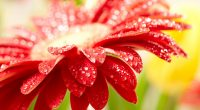 Amazing Red Flower8499710156 200x110 - Amazing Red Flower - Vail, flower, Amazing