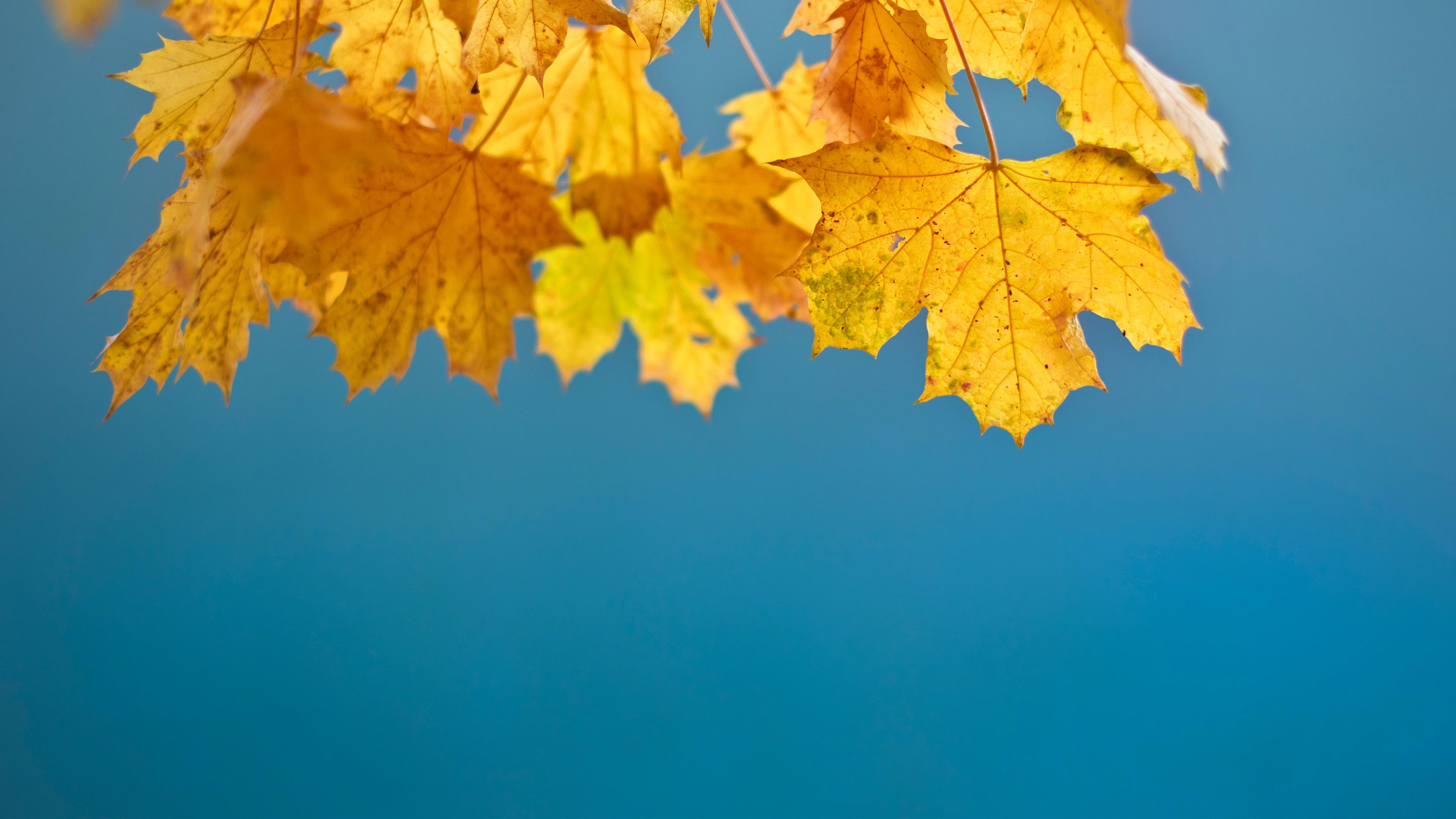 Wallpaper 4k Autumn Leaves 4k Autumn Leaves Lighthouse