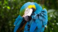 Blue and yellow Macaw661341473 200x110 - Blue and yellow Macaw - yellow, Macaw, Family, blue, and