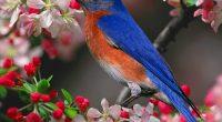 Bluebird672417395 200x110 - Bluebird - Lead, Bluebird