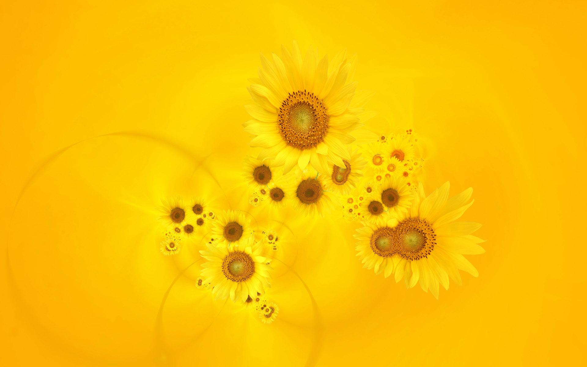 Wallpaper 4k Bright Yellow Sunflowers Bright Gerbera Sunflowers