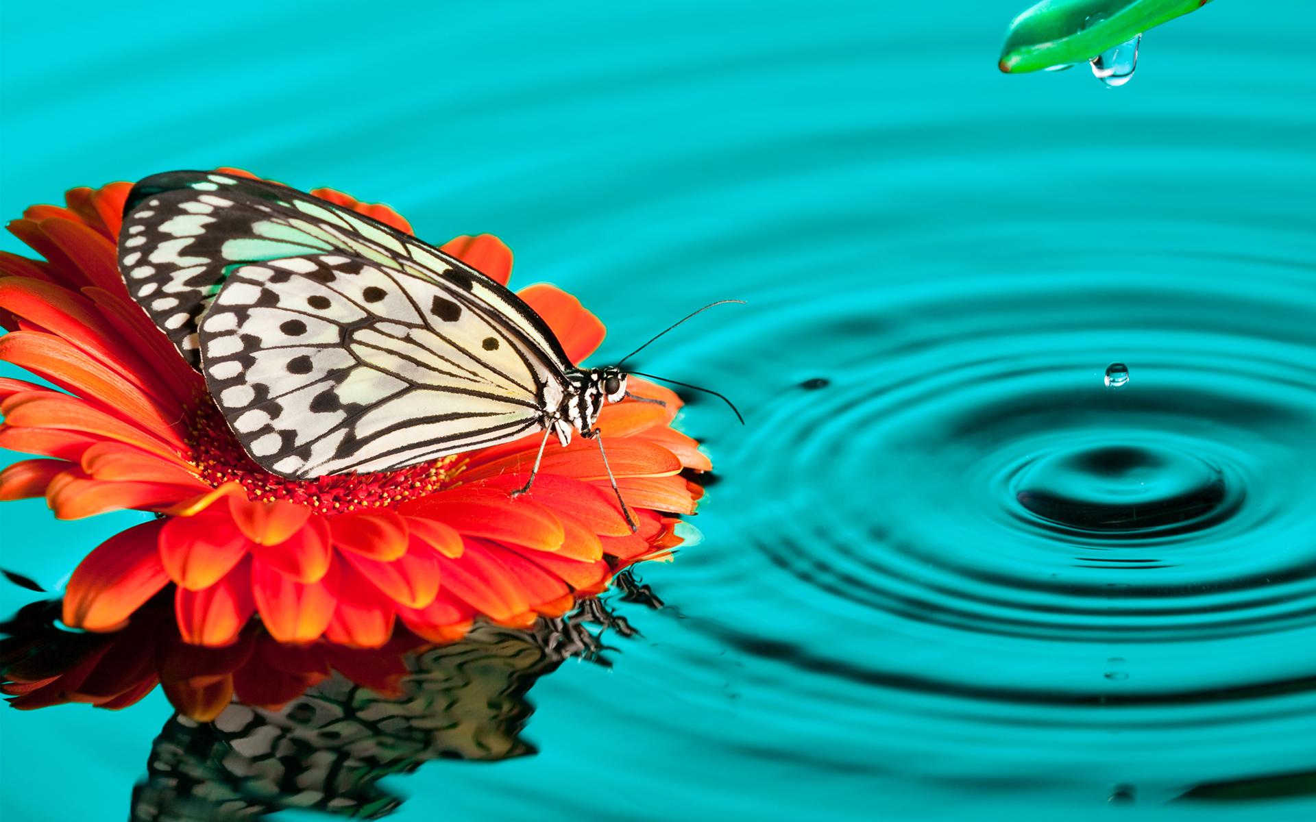 Wallpaper 4k Butterfly Drops Butterfly Drops Leopard