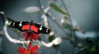 Butterfly781825794 200x110 - Butterfly - Butterfly