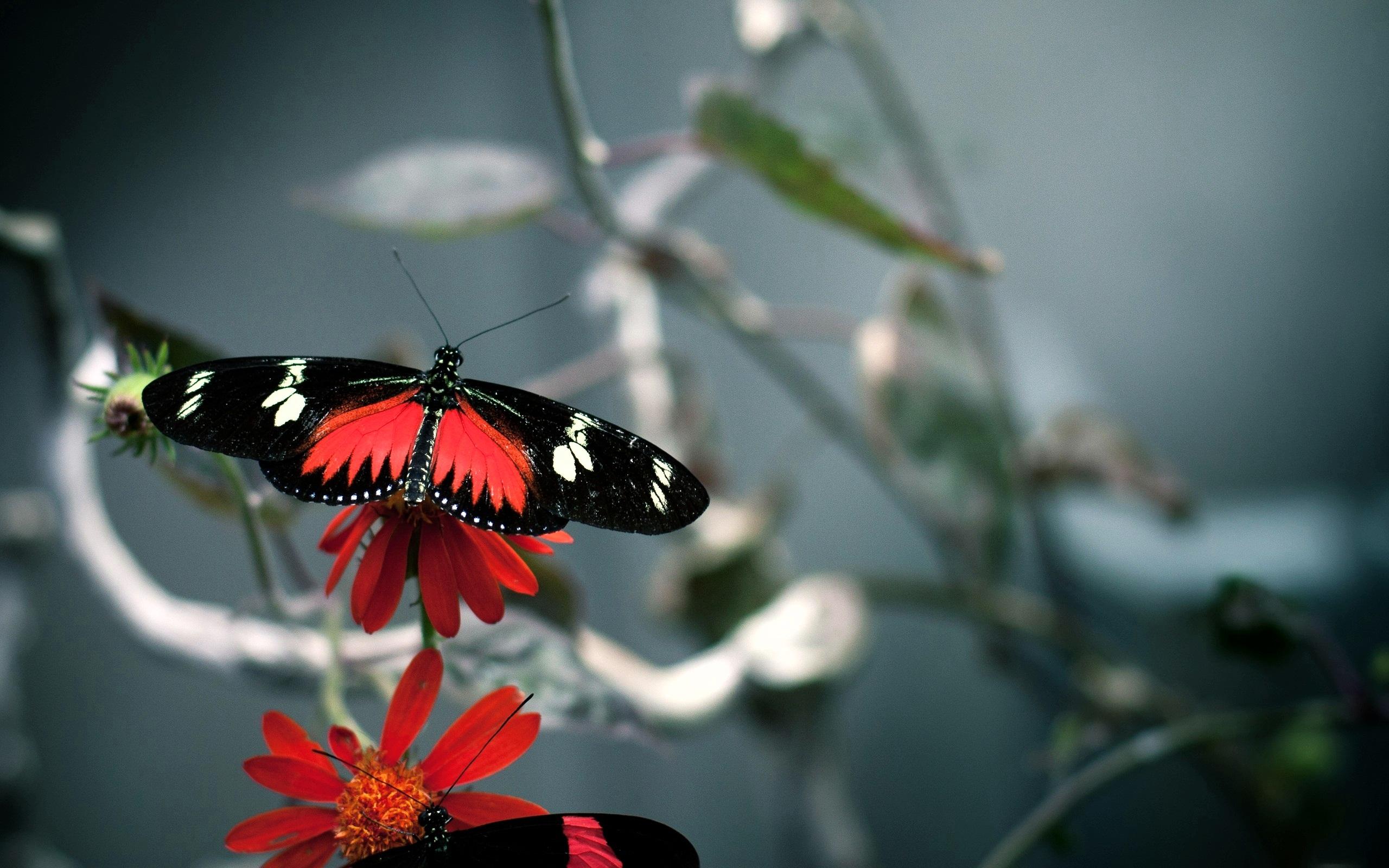 Butterfly781825794 - Butterfly - Butterfly