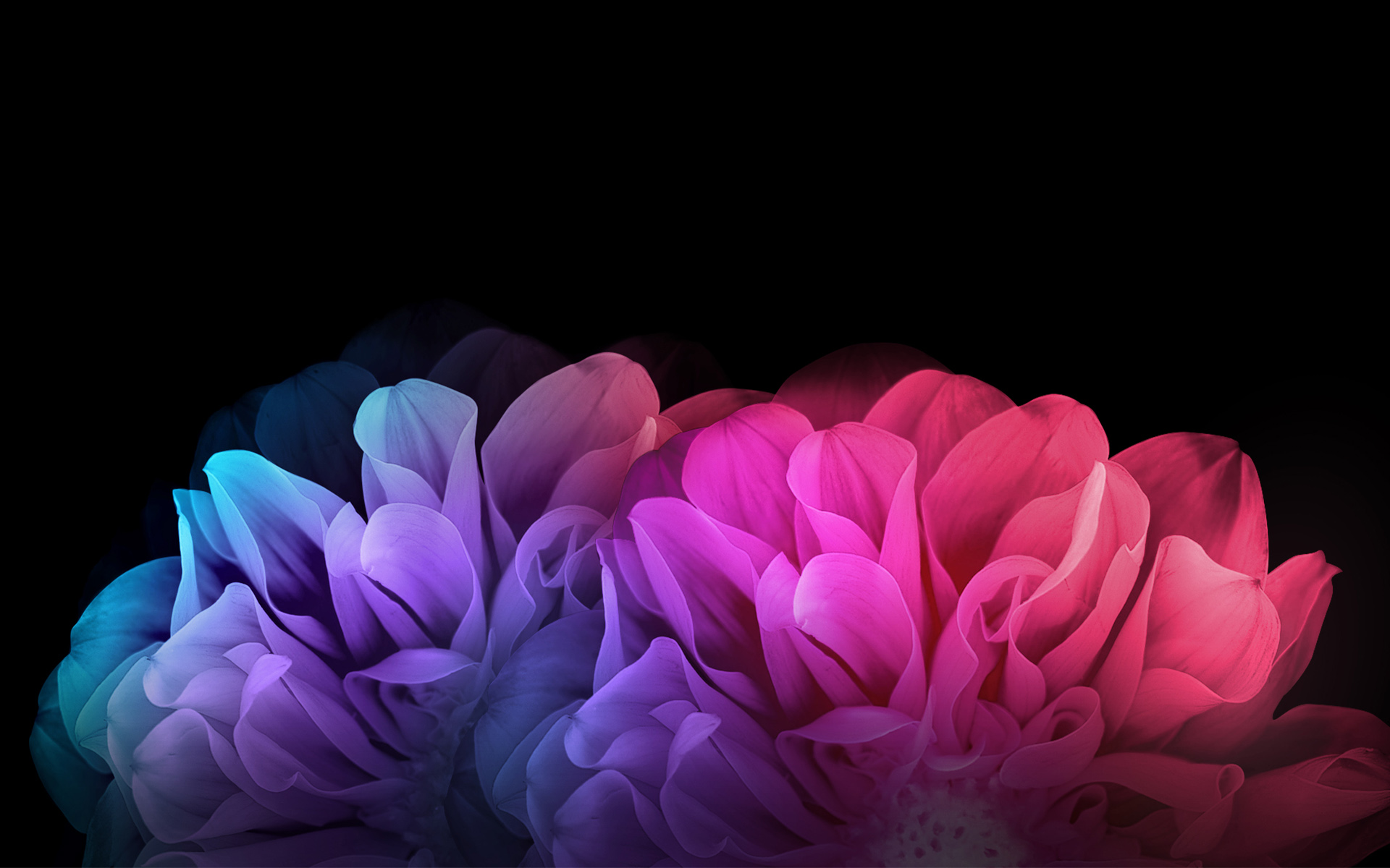 Wallpaper 4k Colorful Flowers Dark Background Background Colorful