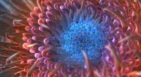 Digital Anemone Flower358693204 200x110 - Digital Anemone Flower - flower, Floating, Digital, Anemone