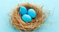 Eggs3265314496 200x110 - Eggs - Eggs, August