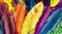 Feathers in Colors1450512592 200x110 - Feathers in Colors - Feathers, Direct, Colors