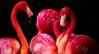 Flamingos5586212348 200x110 - Flamingos - Flamingos
