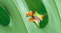 Frog3804912815 200x110 - Frog - Hungry, Frog
