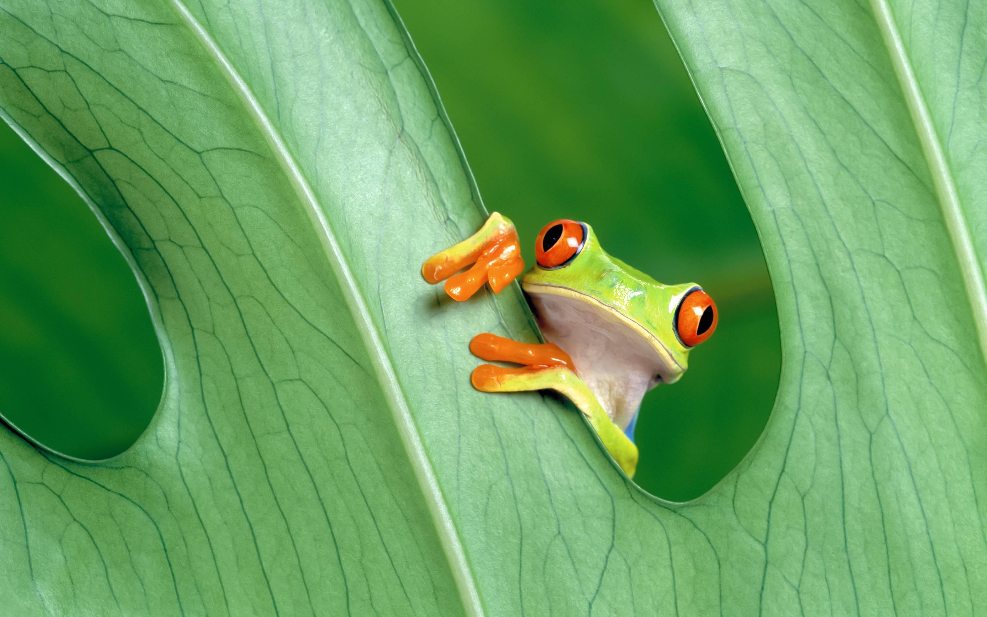Frog3804912815 - Frog - Hungry, Frog