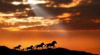 Horses1972416552 200x110 - Horses - Horses, Dolphins