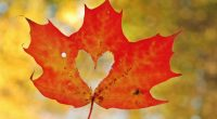 Love Heart Maple Leaf494993012 200x110 - Love Heart Maple Leaf - Poppies, Maple, Love, leaf, Heart