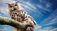Owl473146869 200x110 - Owl - Flamingos