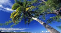 Palm Tree Society Island Beach9176118008 200x110 - Palm Tree Society Island Beach - tree, Society, Palm, Maldives, Island, Beach