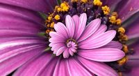 Purple Droste886352726 200x110 - Purple Droste - Purple, Flowers, Droste