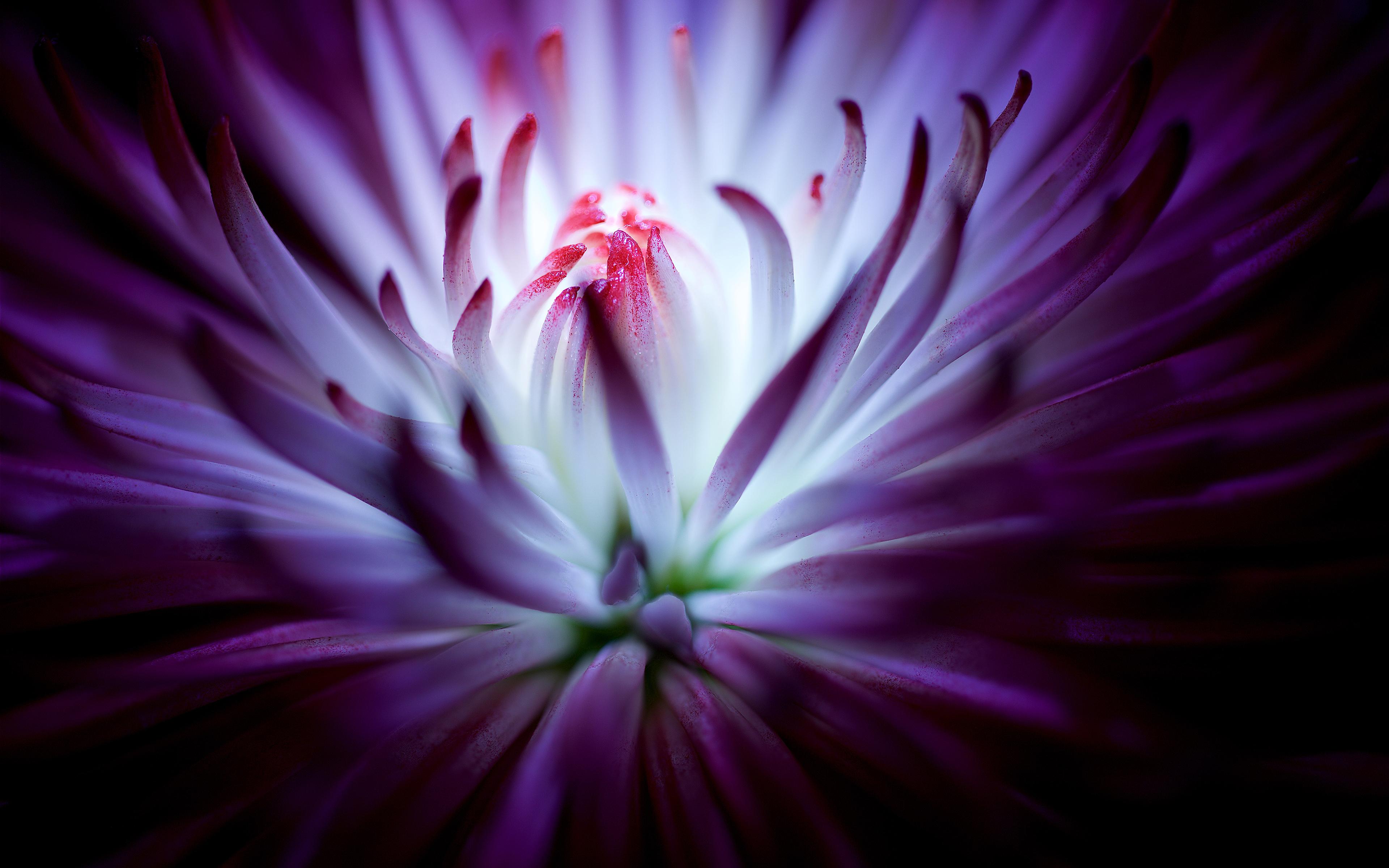 Wallpaper 4k Purple Flower 4k Flower Purple