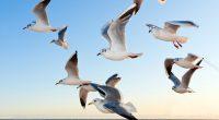Seagulls8357918168 200x110 - Seagulls - Seagulls, Lion