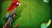 Splash of Parrot720343564 200x110 - Splash of Parrot - Splash, Parrot