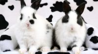 Spotted Rabbits789229002 200x110 - Spotted Rabbits - Spotted, Rabbits, Labrador