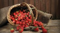 Strawberry Fruits2413019771 200x110 - Strawberry Fruits - Strawberry, Fruits, Access