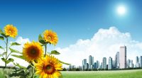 Sunflower City985922870 200x110 - Sunflower City - Sunflower, Dreams, City