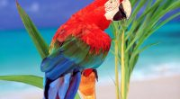 Tropical Colors Parrot7217715666 200x110 - Tropical Colors Parrot - Tropical, Parrot, Colors