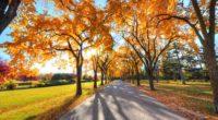 autumn alley park 1535923918 200x110 - Autumn Alley Park - trees wallpapers, park wallpapers, nature wallpapers, autumn wallpapers