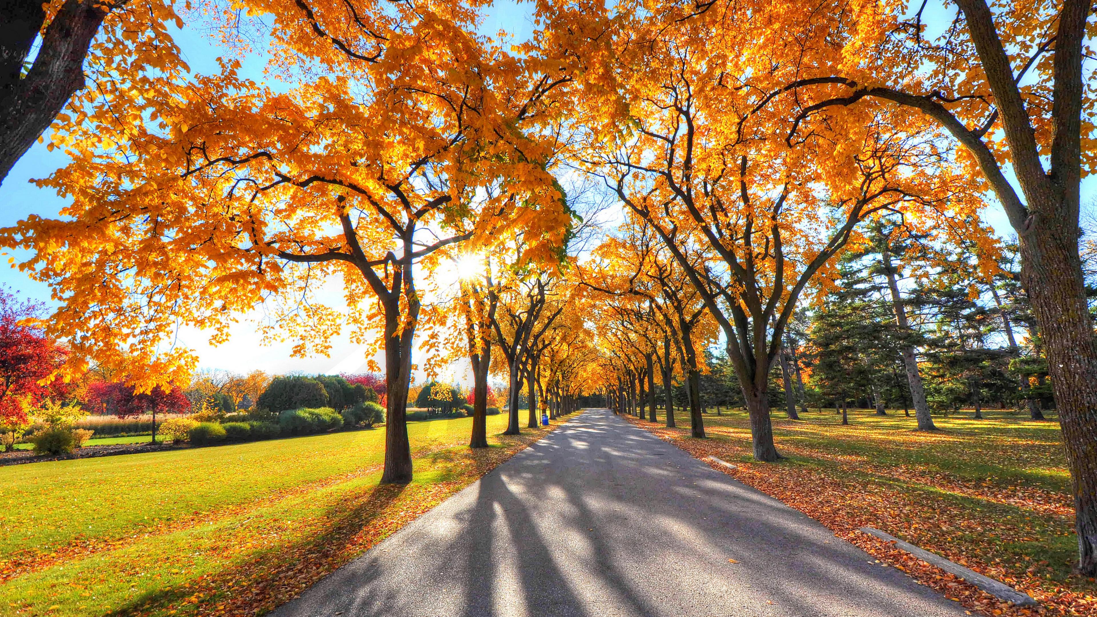 autumn alley park 1535923918 - Autumn Alley Park - trees wallpapers, park wallpapers, nature wallpapers, autumn wallpapers