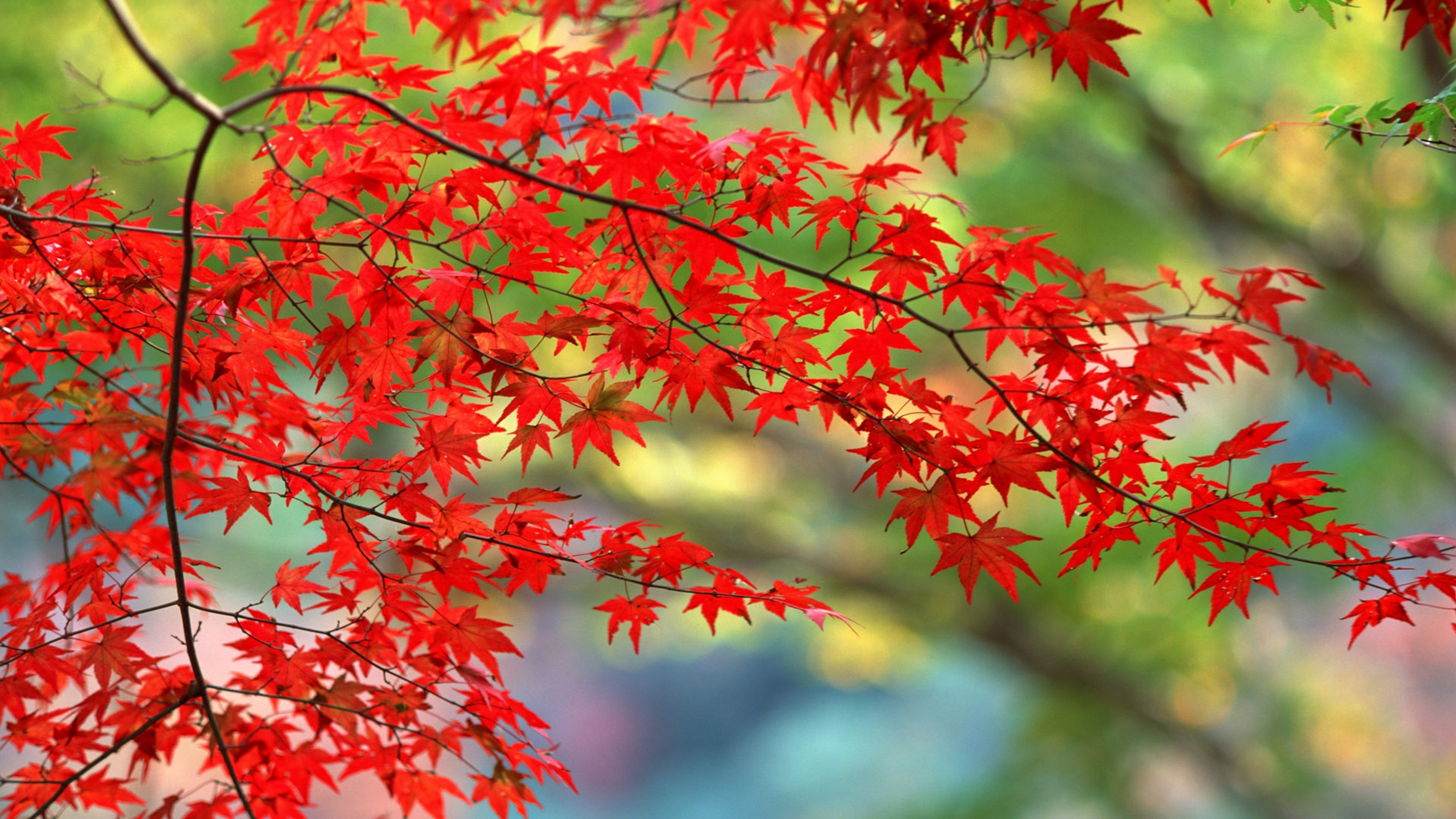 autumn leaves 1535924083 - Autumn Leaves - nature wallpapers, leaves wallpapers, autumn wallpapers