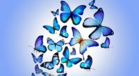butterfly colorful blue drawing art beautiful 4k 1536098899 200x110 - butterfly, colorful, blue, drawing, art, beautiful 4k - Colorful, Butterfly, blue
