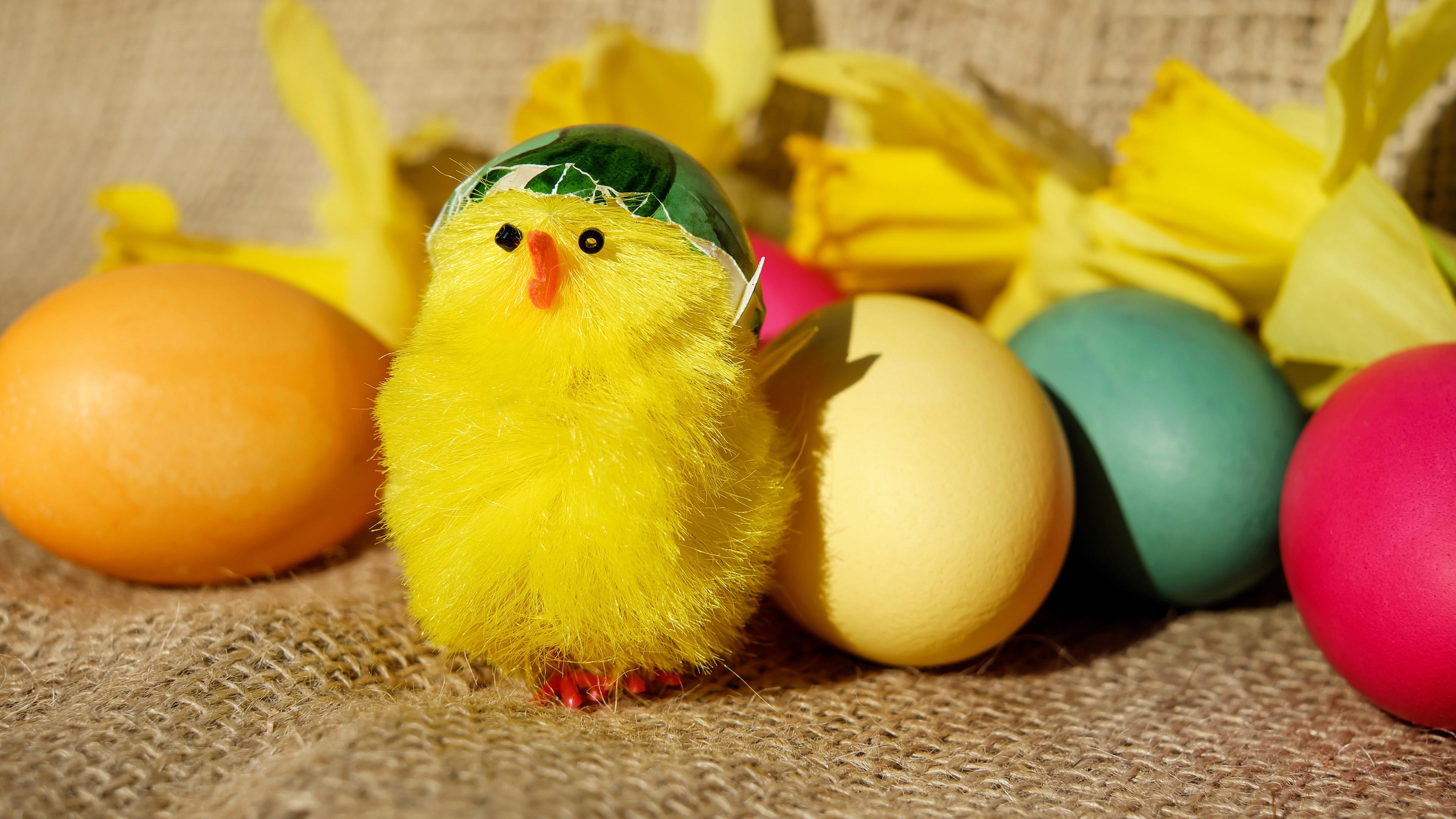 chick eggs easter 4k 1538344990 - chick, eggs, easter 4k - Eggs, Easter, chick