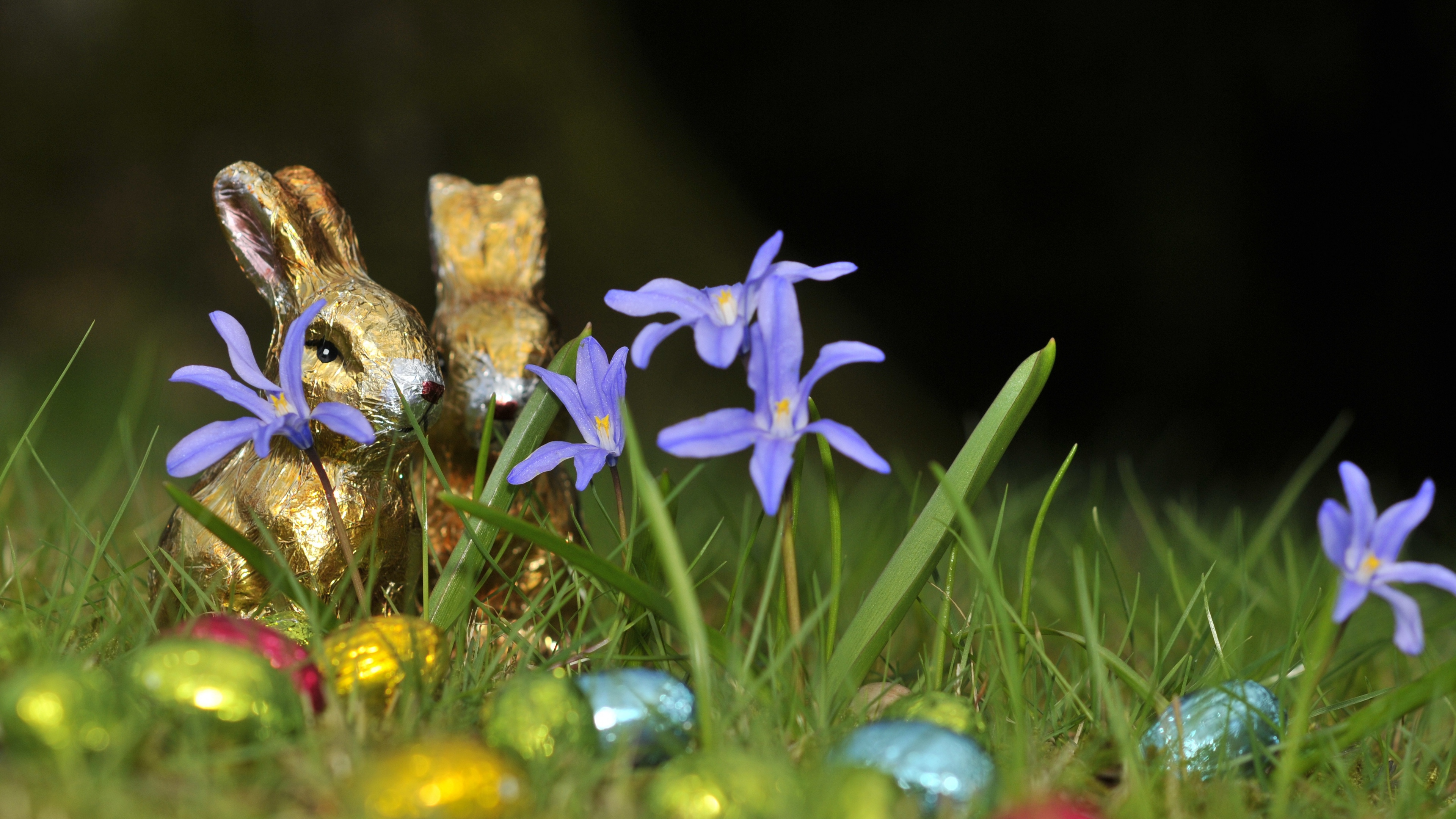 chocolate rabbits easter eggs flowers grass 4k 1538344802 - chocolate rabbits, easter, eggs, flowers, grass 4k - Eggs, Easter, chocolate rabbits