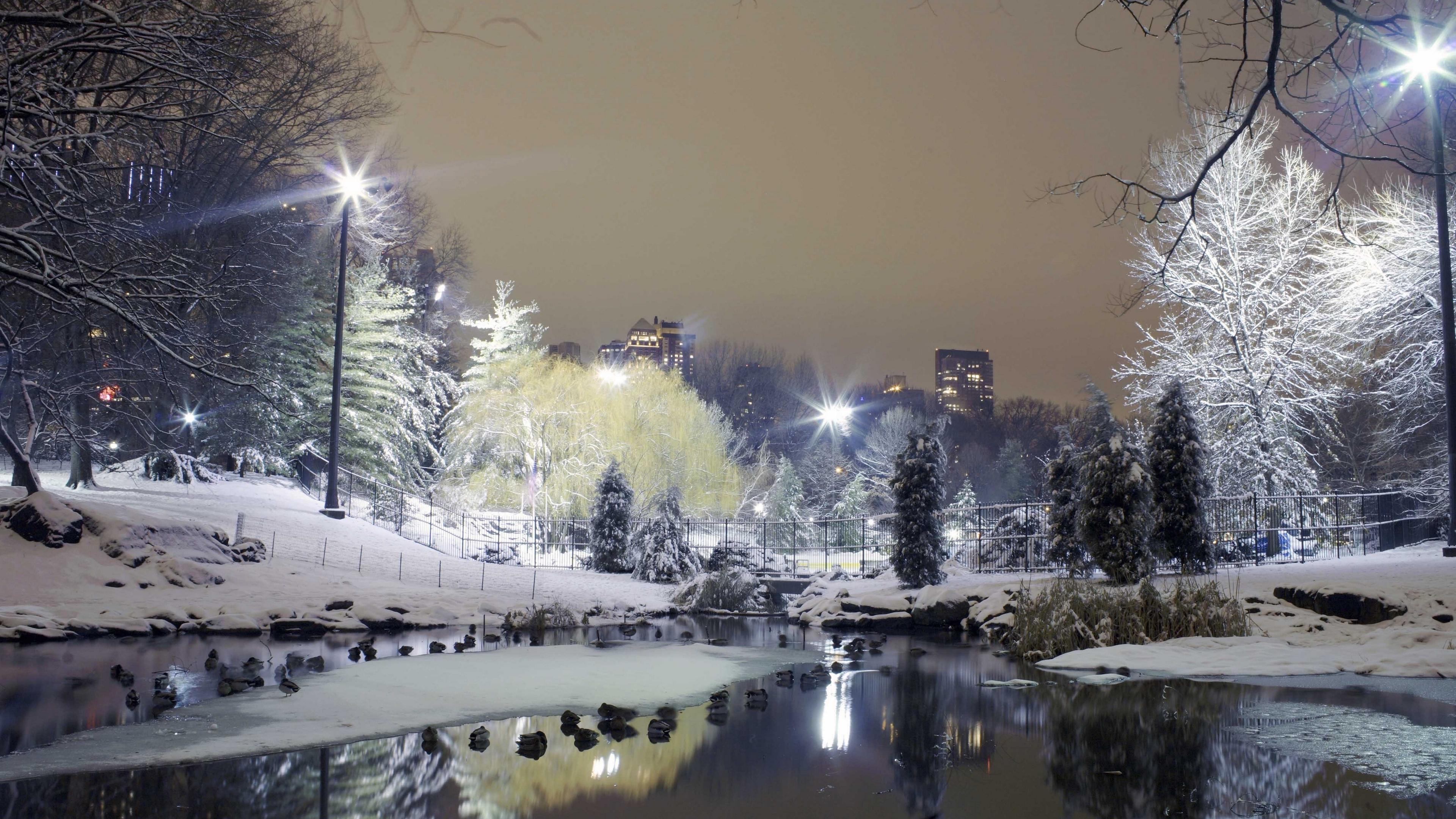 city park trees winter snow lights 4k 1538068521 - city, park, trees, winter, snow, lights 4k - Trees, Park, City