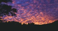 clouds trees sunset porous evening 4k 1536017761 200x110 - clouds, trees, sunset, porous, evening 4k - Trees, sunset, Clouds