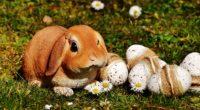 easter rabbit eggs 4k 1538344843 200x110 - easter, rabbit, eggs 4k - Rabbit, Eggs, Easter