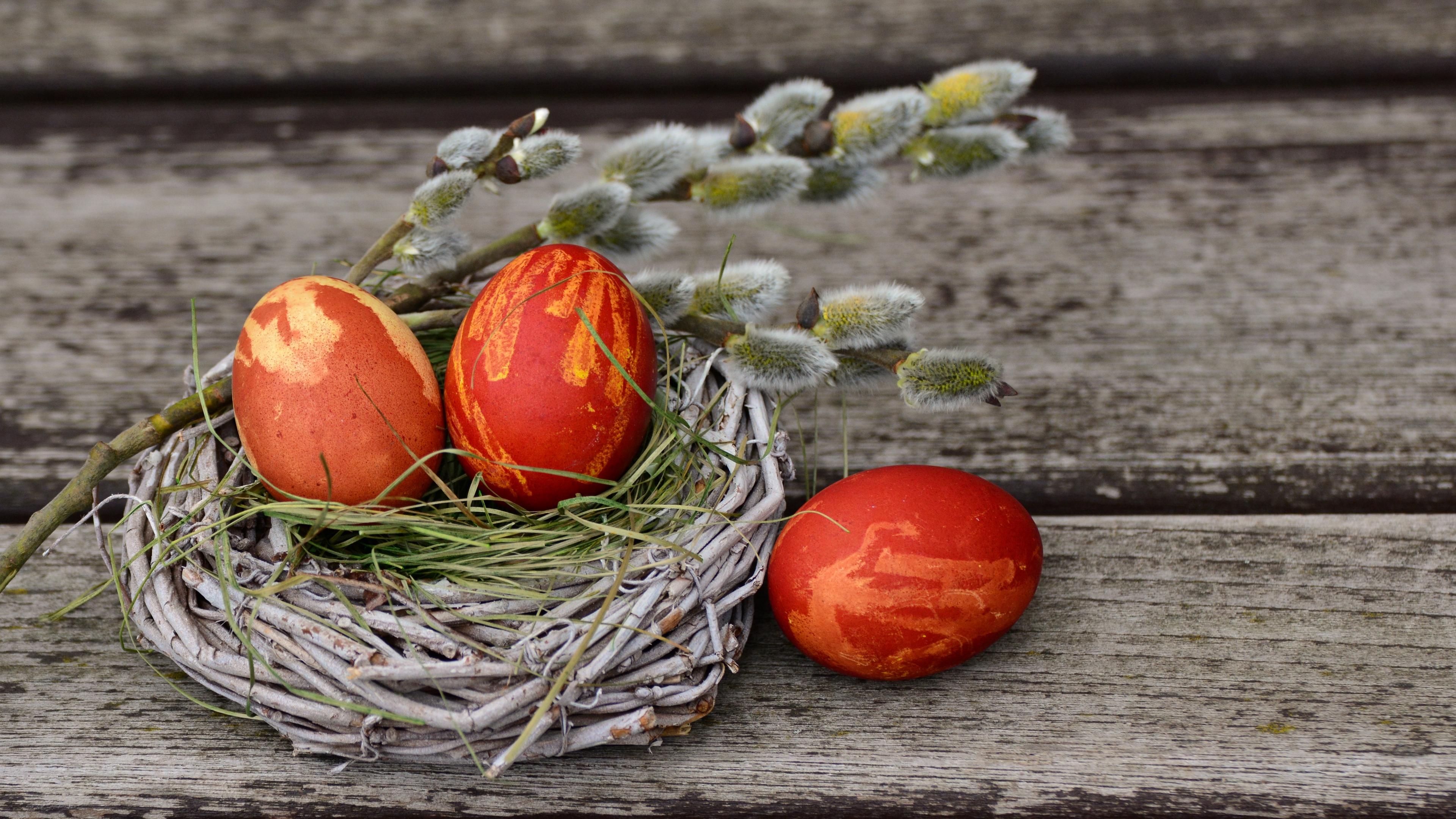 eggs easter willow decorating 4k 1538344634 - eggs, easter, willow, decorating 4k - willow, Eggs, Easter