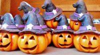 halloween pumpkin hat 4k 1538344853 200x110 - halloween, pumpkin, hat 4k - pumpkin, hat, halloween