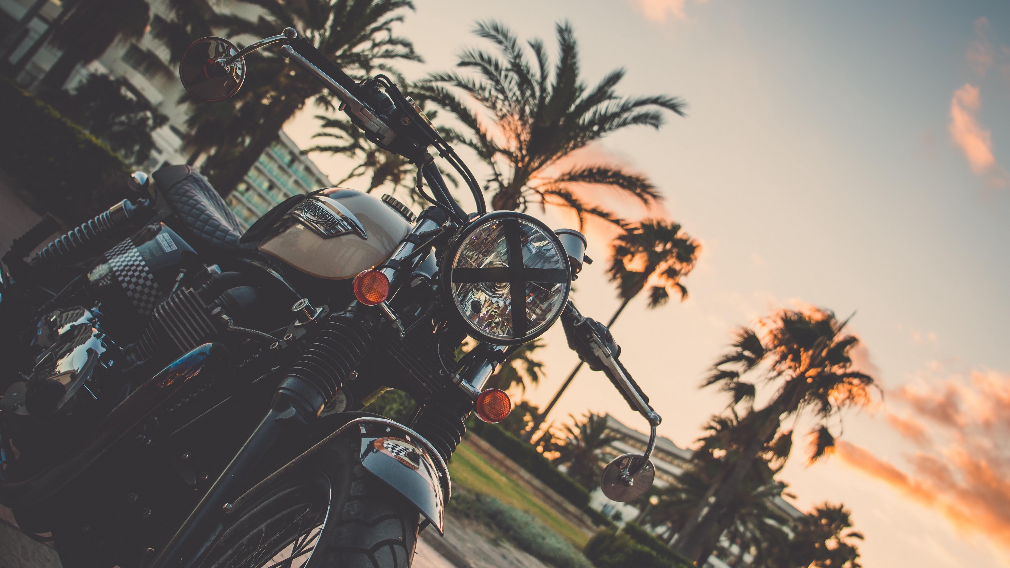 motorcycle bike palm tree 4k 1536018800 - motorcycle, bike, palm tree 4k - palm tree, Motorcycle, Bike
