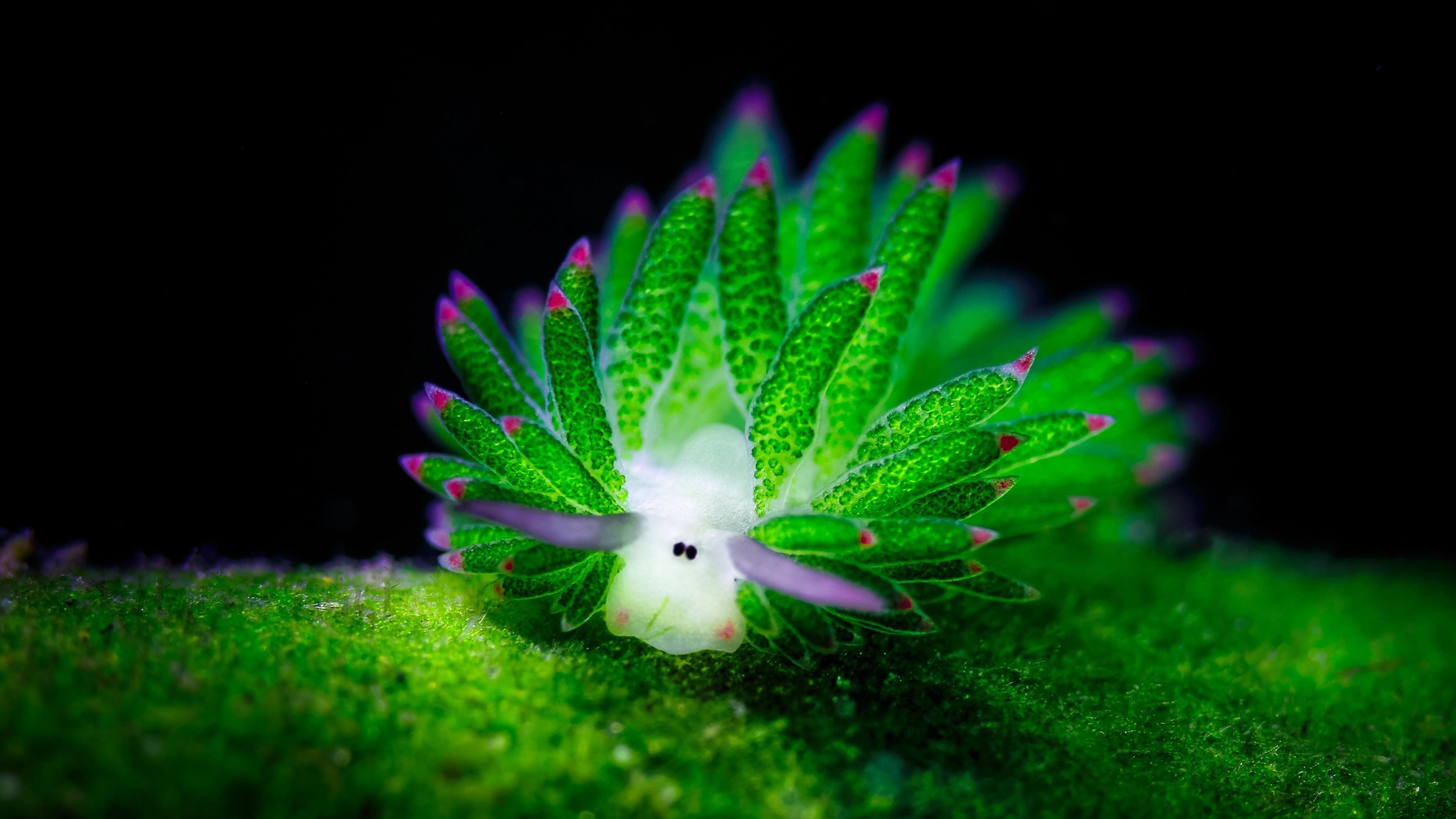 nudibranchia plant underwater 1535930130 - Nudibranchia Plant Underwater - underwater wallpapers, nature wallpapers