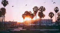 palm trees dawn birds venice beach los angeles united states 4k 1538067981 200x110 - palm trees, dawn, birds, venice beach, los angeles, united states 4k - palm trees, Dawn, Birds